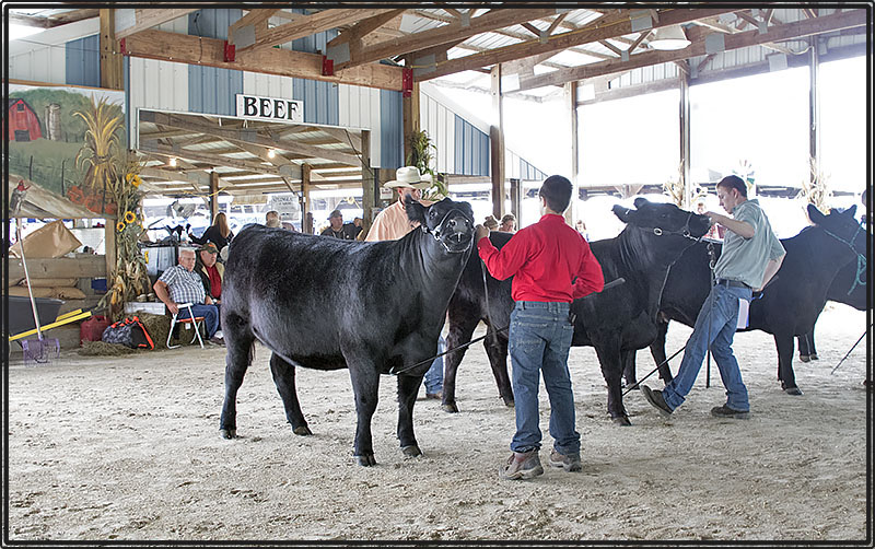 dm2015 silver cattle show 090915