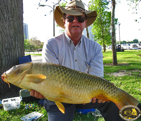 29-6 common - Lagoon - Chicago, IL - Dr. Frank Rink