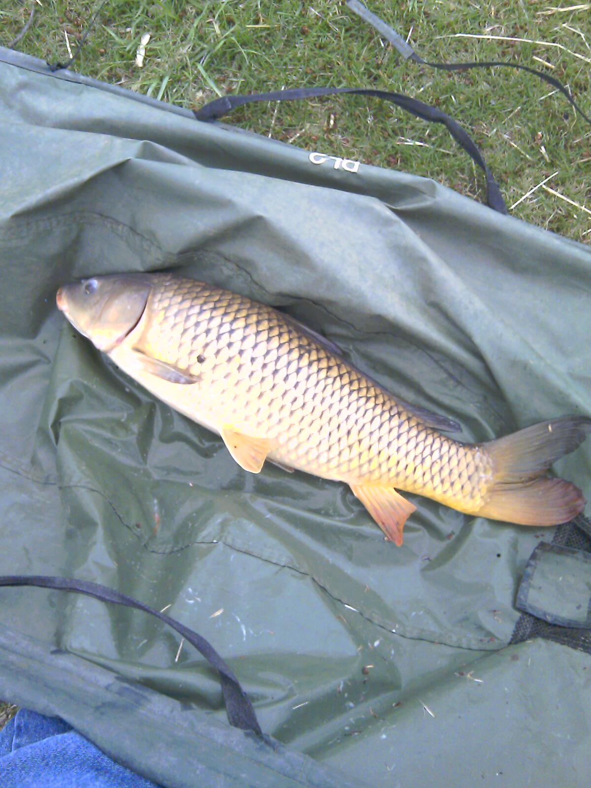 The Big Worm\'s Content - Page 2 - Carp Anglers Group Forums