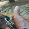 Georgia waters with carp ? - last post by needmotime2fish