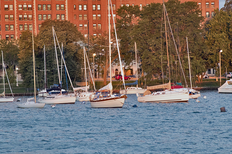 belmont sailboats 100115