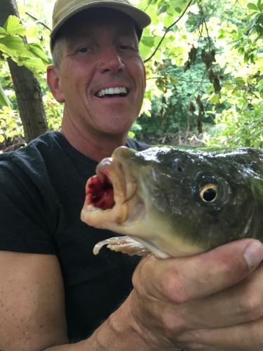 Common_with_damaged_mouth_7lb_7oz_Aug_8_2017.JPG