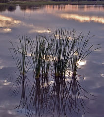 Lily Cache Pond - Reflections - Bolingbrook, IL - Dr. Frank Rink